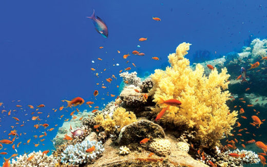 tropical reef article header image