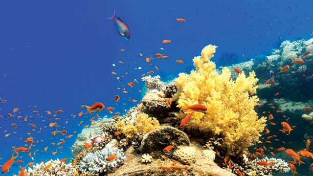 The Ocean's Forests – How We Can Win One for the Corals and Why We Need to Care