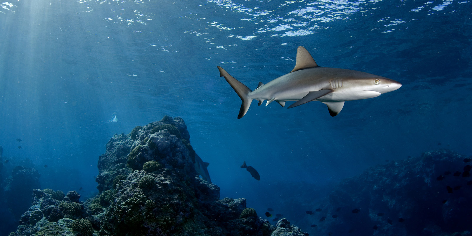 Shark over Reef - Image by National Geographic